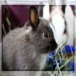¿Realmente es tan importante vacunar a nuestros conejos?
