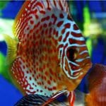 7 trucos para tener peces más sanos