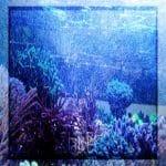 Microburbujas en los acuarios marinos ¿beneficiosas o dañinas?
