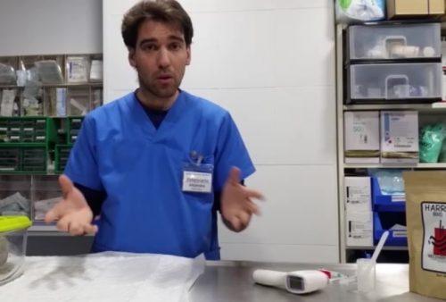 ¿Sabes cómo debes dar la papilla en loro papillero? Te explicamos unos pequeños trucos que te facilitarán mucho las cosas ;)