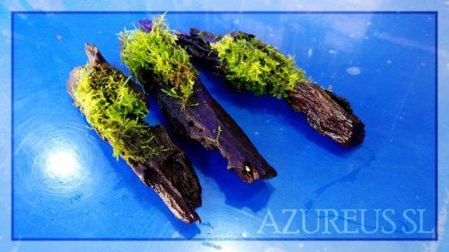 Estos musgos en troncos van a ser la envidia de todo el que vea tu acuario con él dentro ;)