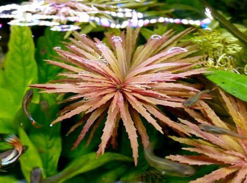 Nueva llegada de plantas en Azureus, no te la pierdas, varias plantas se están poniendo suuuuper chulas :D