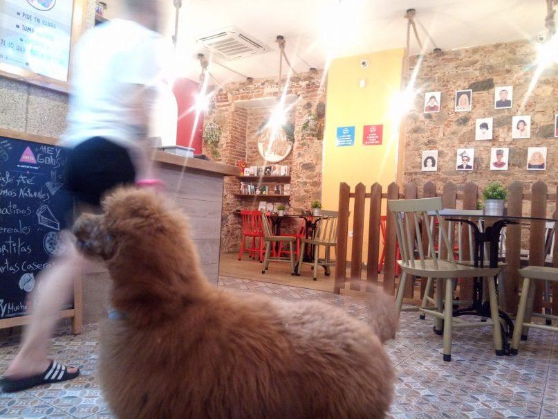 La casa del goloso en Cáceres, tu cafetería para disfrutar con tu peludete ;)