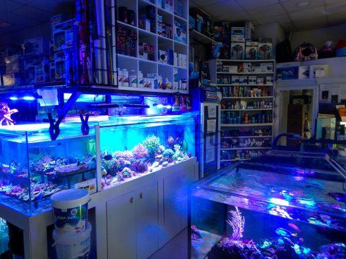Nuestro acuario de exposición está poniéndose ESPECTACULAR. Ven a verlo en directo