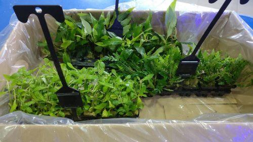¡Un montón de plantitas nuevas en Azureus ya disponibles!