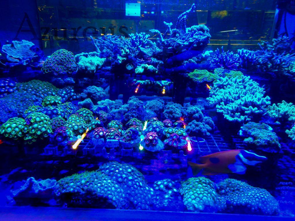 Nuestro huertito de esquejes de coral está precioso