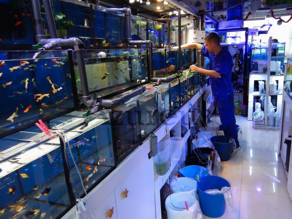 David colocando el pedido de peces de agua dulce