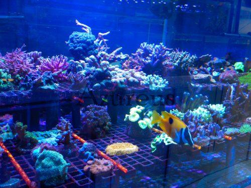 Nuestra huerta de corales :)