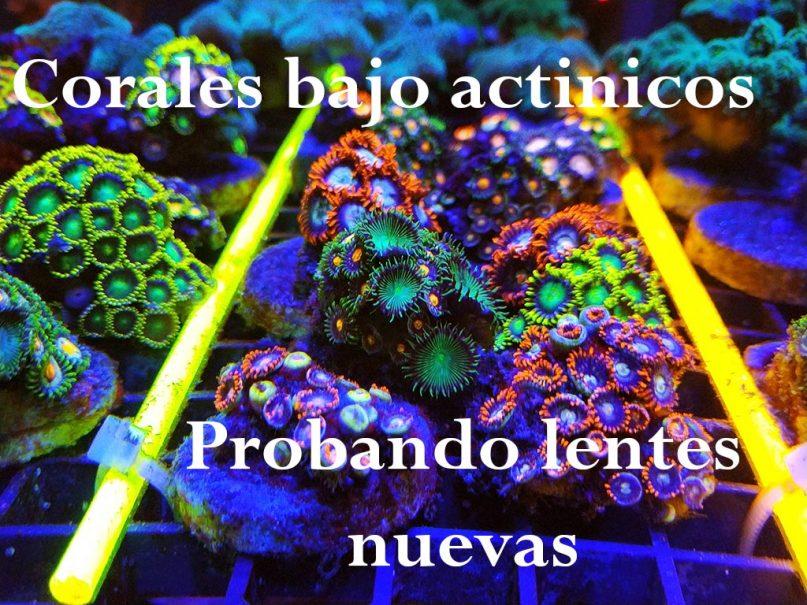 Corales bajo actínicos, nuevo vídeo en nuestro canal de youtube