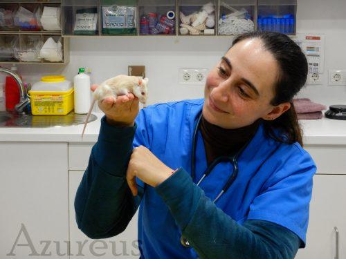 Estefanía con la ratona Antártida en revisión